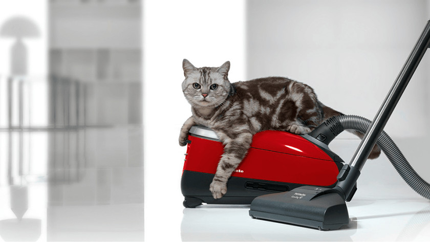 Huisdieren en stofzuigen
