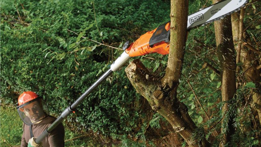 Normale levende bomen kappen met kettingzaag