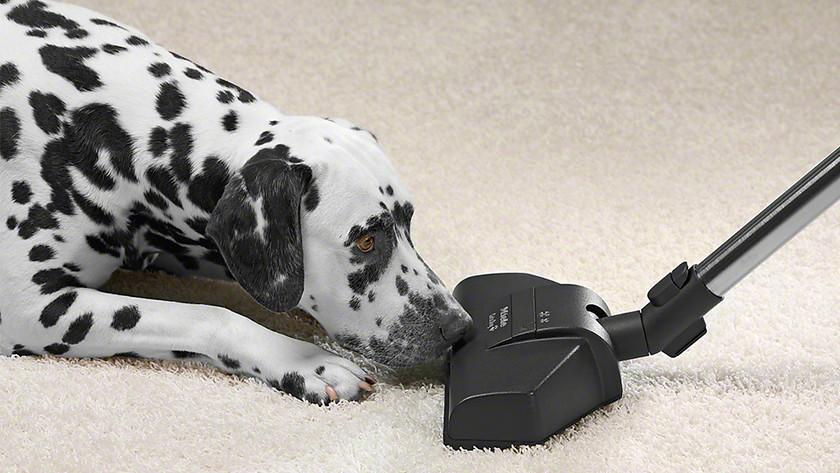 Vacuum turbo brush pet hairs