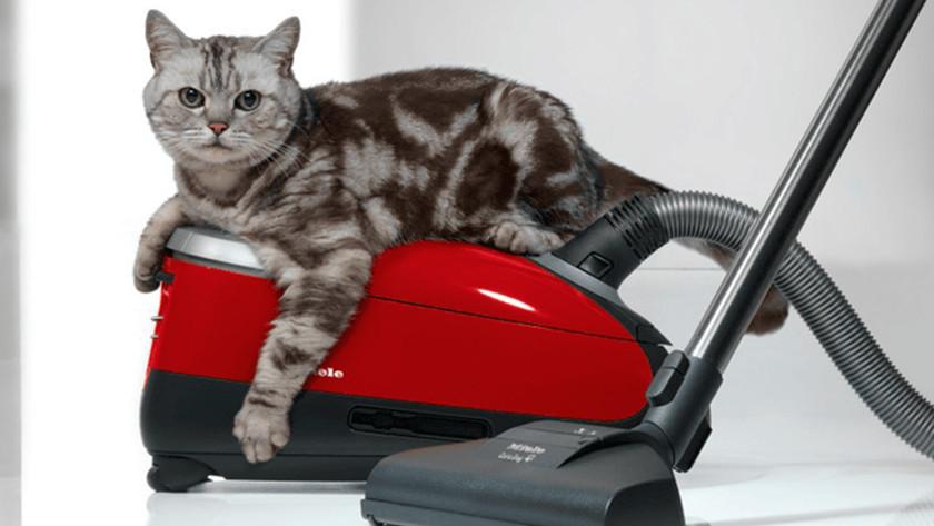 Huisdieren en een stofzuiger