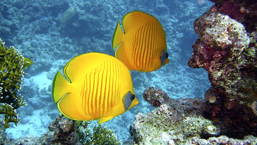 poisson aux couleurs vives