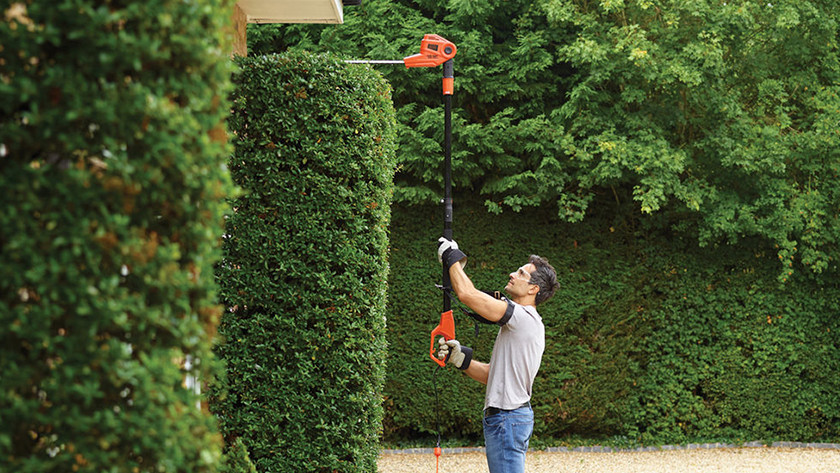 Pruning conifers