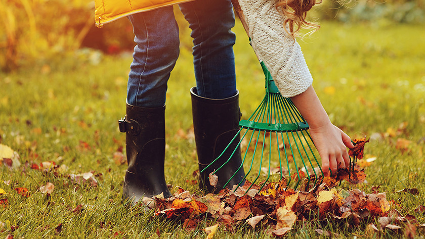 Garden maintenance in the fall