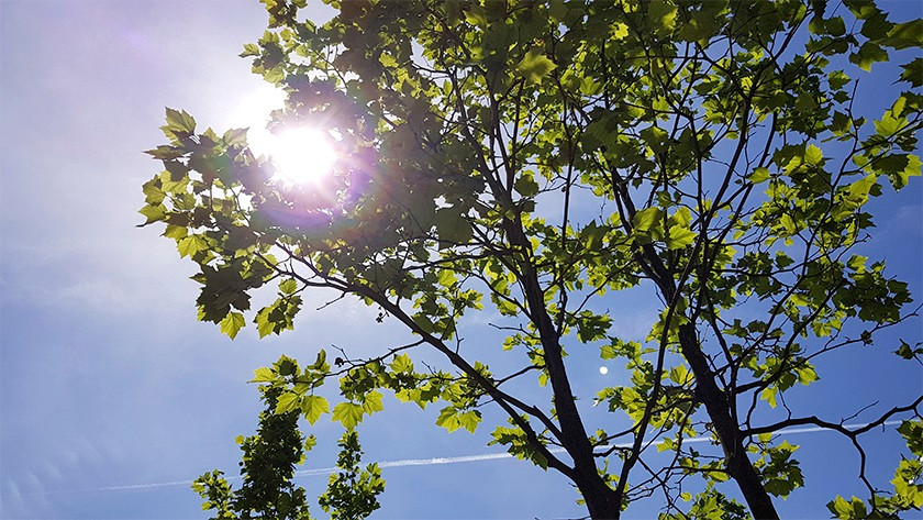 S8 Plus backlit photos