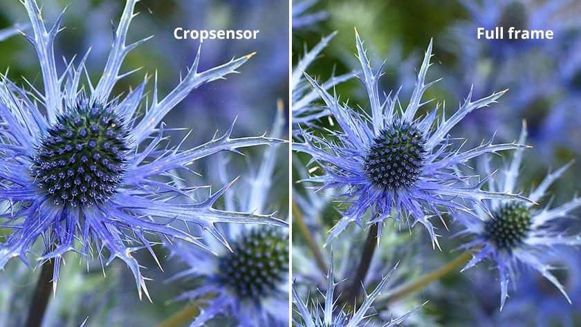 Full frame sensor vs crop sensor