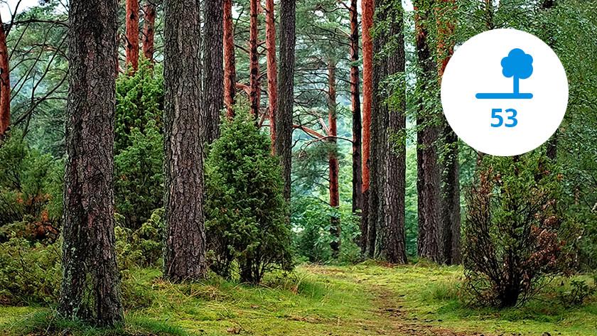 Nombre d'arbres nécessaires émissions de CO2