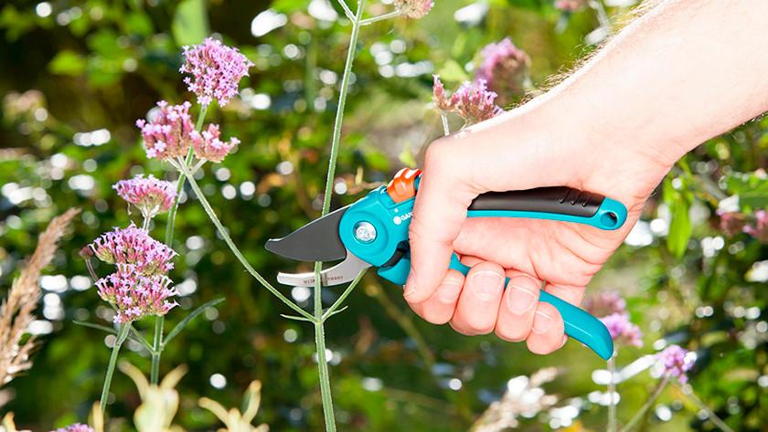Haal uitgebloeide bloemen uit de plant