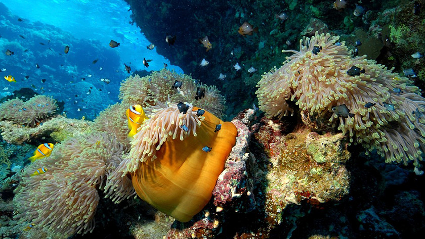 corail vibrant