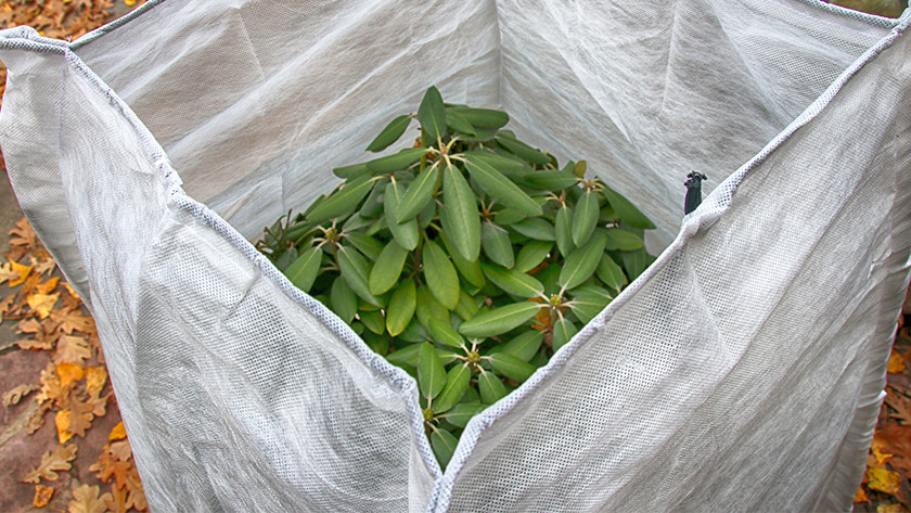 Protéger les plantes d'extérieur contre le froid hivernal