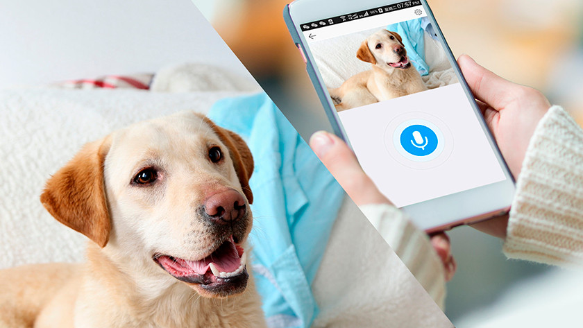 Pet IP camera