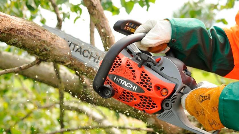 Grote leven bomen kappen met kettingzaag