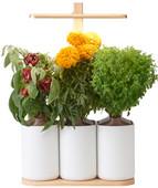 Pret a Pousser Indoor Garden Lilo Edition